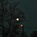 un soir d'hiver, pleine lune entre Toulouse et Montauban