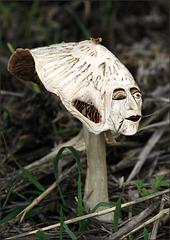 Mycota Troll