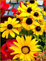 Un bel giallo per attirare gli impollinatori !