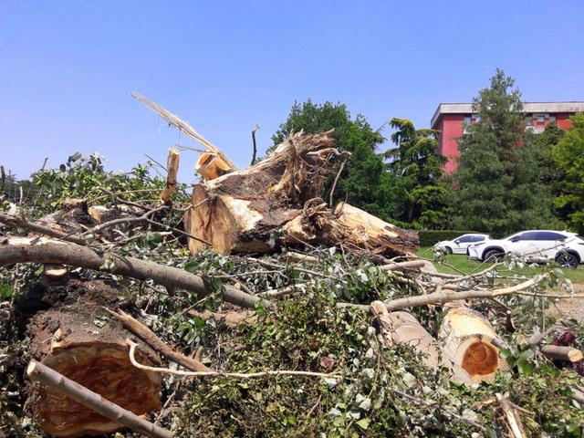 Oggi uno scempio nel Parco... sono stati abbattuti 2 alberi centenari bellissimi!