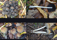 Fungi village! Any clue what they may be?