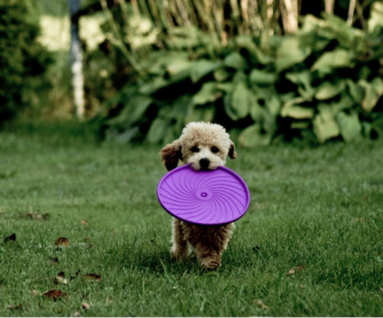 Moi aussi je joue du frisbee :-)