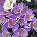 IMG 7804-001-Blooms2