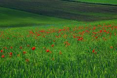 Rote Tupfer im satten Grün