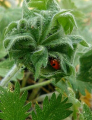 Ladybug home