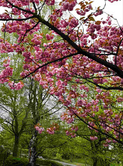 ...the colors of May...