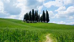 Historical region of Val d'Orcia, between the towns of Montepulciano and Montalcino