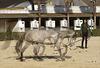 Horse Training in Jerez
