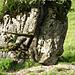 ...ein Baum wächst durch den Fels