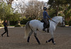 The Riding Lesson