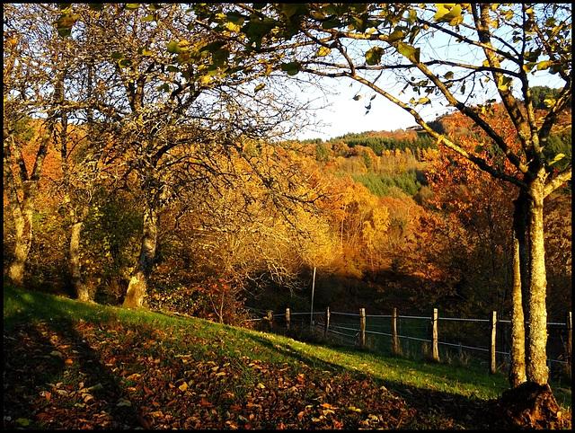 L'automne enchanté au bout de mon pré (1) HFF [ON EXPLORE]
