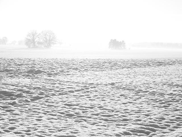 fog over the snow