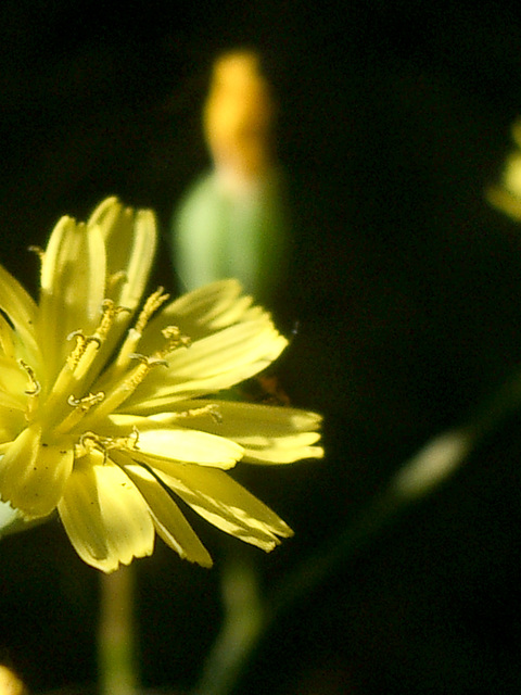 flowers - yellow
