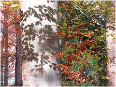 Herbstliche Schatten