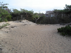Sable et nature / Sand and nature