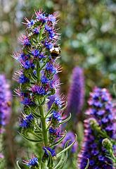 Zurück von der Blumeninsel Madeira - Back from the Flower Island Madeira