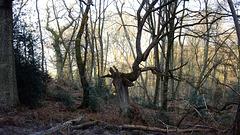 39 Forêt de Fontainebleau
