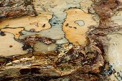 Dead wood - under the bark 1