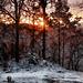 lumière d'hiver-4