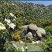 La Sierra de Cabrera in spring.