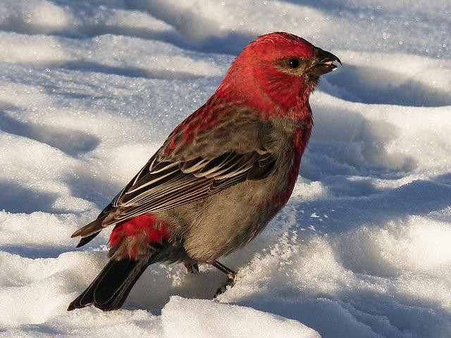 So pretty against the snow