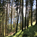 Wanderung zu den Innergsellwiesen (3 PIP)