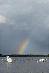 Rainbow above Swan lake...