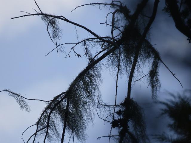 Ramas del bosque del sur