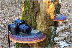 Storage Camera