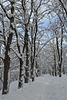 Киев, Зима в Протасовом Яру / Kiev, Winter in the Park of Protasov Yar