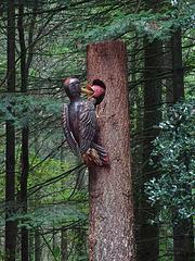 Woody woodpecker & juvenile  !