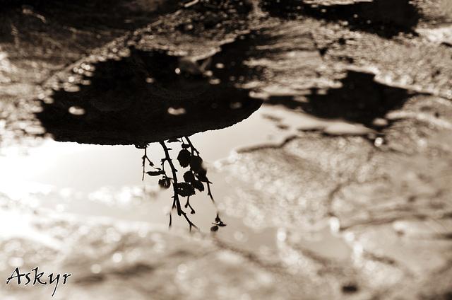 Reflet dans les flaques...