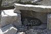 Schneeleopard Ladakh im neuen Gehege (Wilhelma)