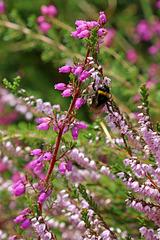 Irish Wildflowers 1
