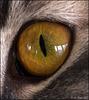 Eye Macro (Isabelle)