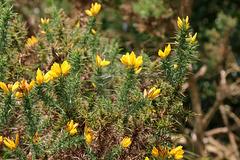 Irish Wildflowers 2