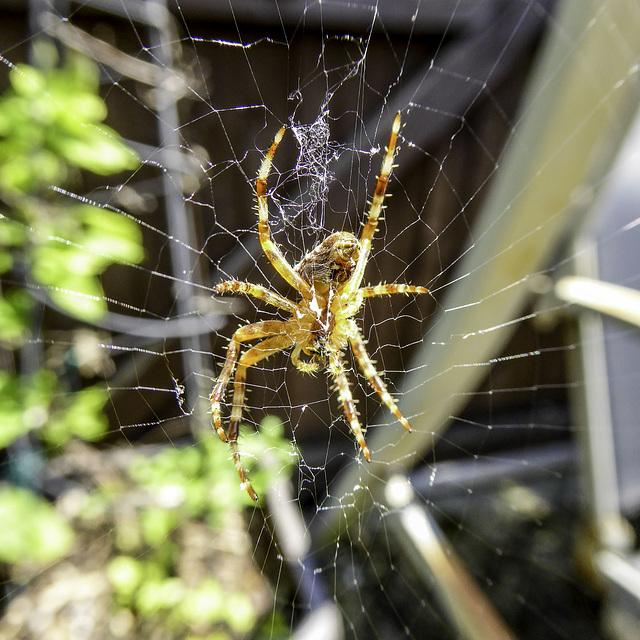 Spider's World