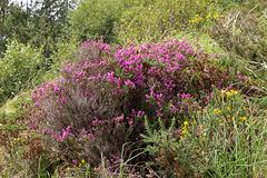 Irish Wildflowers 3