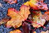 1 (14)...austria autumn herbst leav blätter