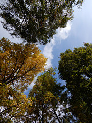 la puissance des arbres