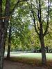 281 Maillebahn am  Pillnitzer Schloss