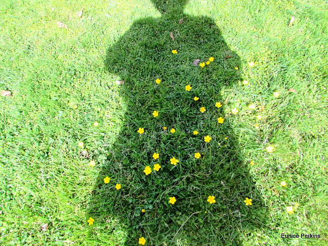 Shadow Over Buttercups.