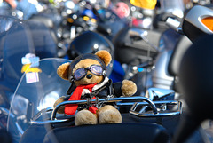 Biker Teddy Bear in Cologne