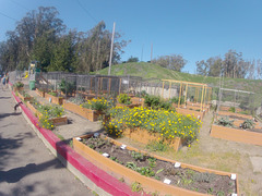 San Francisco Presidio Community Gardens (0008)