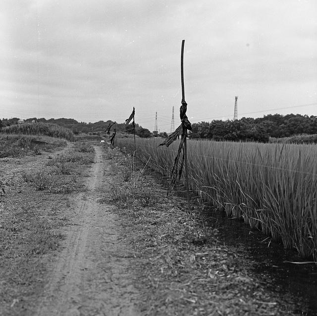Dirt road in the fields