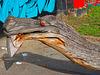 1 (39)a...austria vienna ...am kanal...drache dragon tree