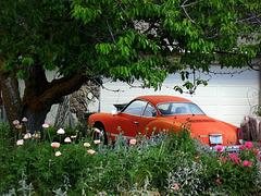 Karmann-Ghia in the garden