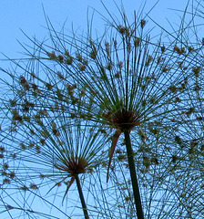 SUR FOND DE CIEL BLEU / AGAINST THE BLUE SKY
