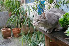 Le sosie de mon chat Oubi