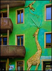 Das Giraffenhaus - Dresden